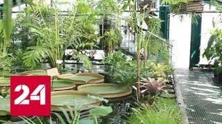 В Ботаническом саду МГУ распустился редкий цветок