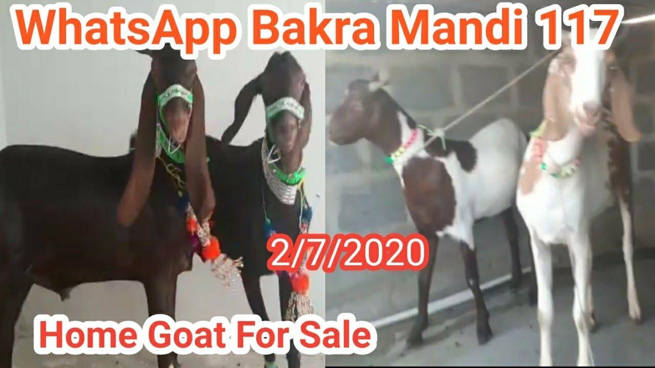 How To Buy And Sale Your Goat Through Whatsapp Bakra Mandi No 117 Livestock Market Karachi