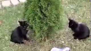 Милые маленькие Черные котята