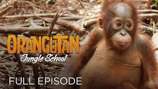 Orangutan Jungle School: Movin' on Up (Full Episode)