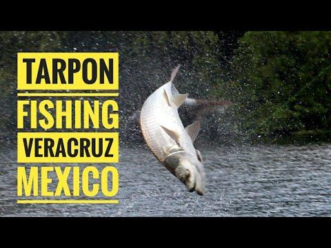 Tarpon Fishing - Tres Encinos, Veracruz, Mexico (4K)