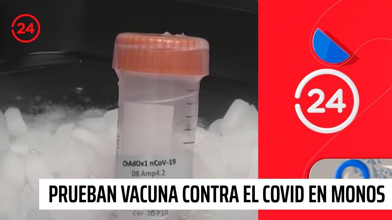 Universidad de Oxford prueba con éxito la vacuna contra el coronavirus en monos