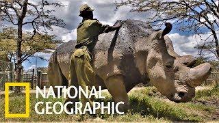 人類對不起你!地球上最後一頭雄性北白犀走了……《國家地理》雜誌