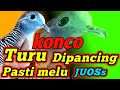 Suara Perkutut Lokal Kerot Gacor Jos  Mp3 - Mp4 Download
