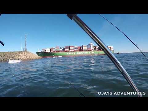 Fishing In Botany Bay Sydney Using Live Bait (June 2017)