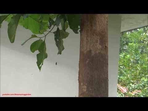 Black wood / Siamese Rosewood - Teak, Black wood, Siamese Rosewood