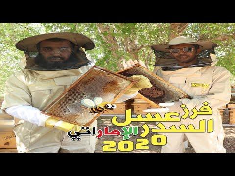 مقتطفات من فرز عسل السدر الاماراتي المميز لعام 2020
