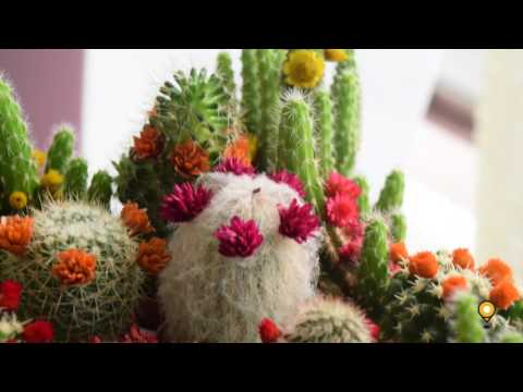 Beautiful Occasion Flower Shop