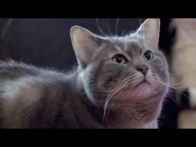 How Do You Like Meow: Harold and Ninja