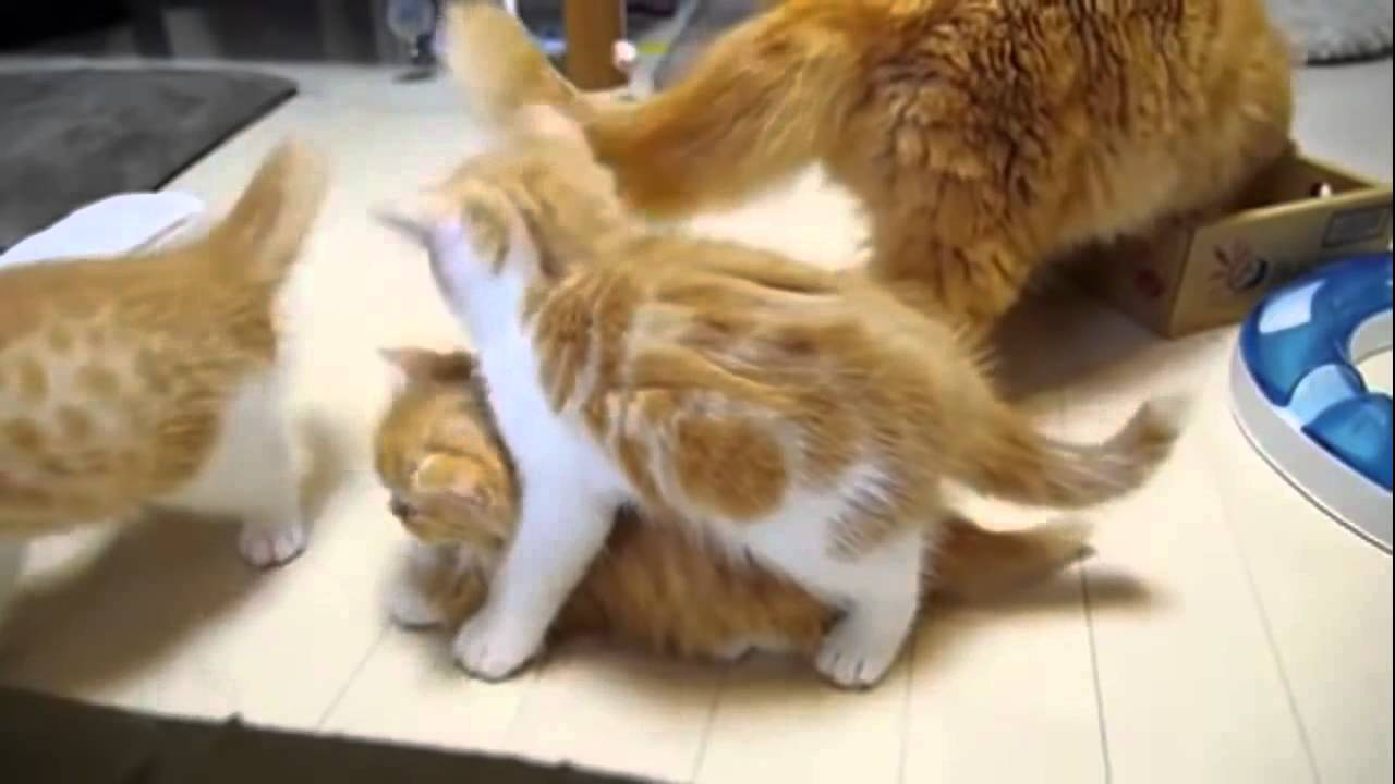 Funny cats doing weird things