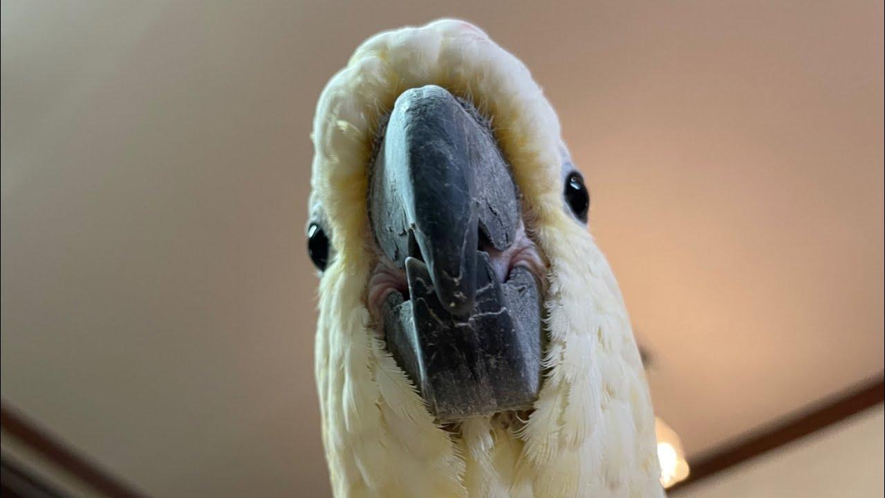 [루이&몽몽&다정&로미] 오늘도 평화로운 루몽다로네 🏡 So cute parrots!