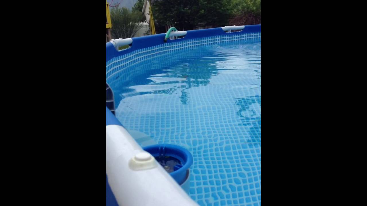 How To Get Rid Of Ants Around Swimming Pool Howsto Co
