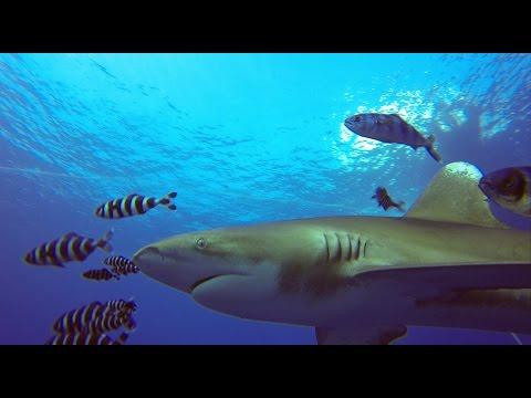 Diving Safari Northern and Wreck Red Sea Egypt 10-17.11.2016 (DivingFox)