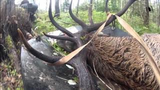 Охота на оленя в Эстонии видео