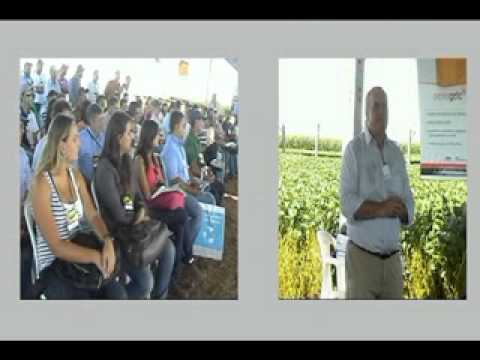 Видео Sistema plantio direto e conservação do solo