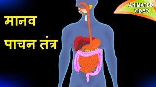 मानव पाचन तंत्र  || Digestive system in Hindi (animated video) || Science- Open mind