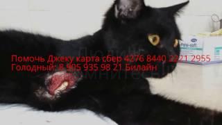 Отрубленная лапа у кота   Нашли на Хэллоуин   The severed paw of a cat Found on Halloween