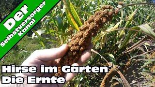 Hirse im Garten anbauen für Selbstversorger