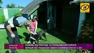 Собака вернулась к хозяину спустя пять лет