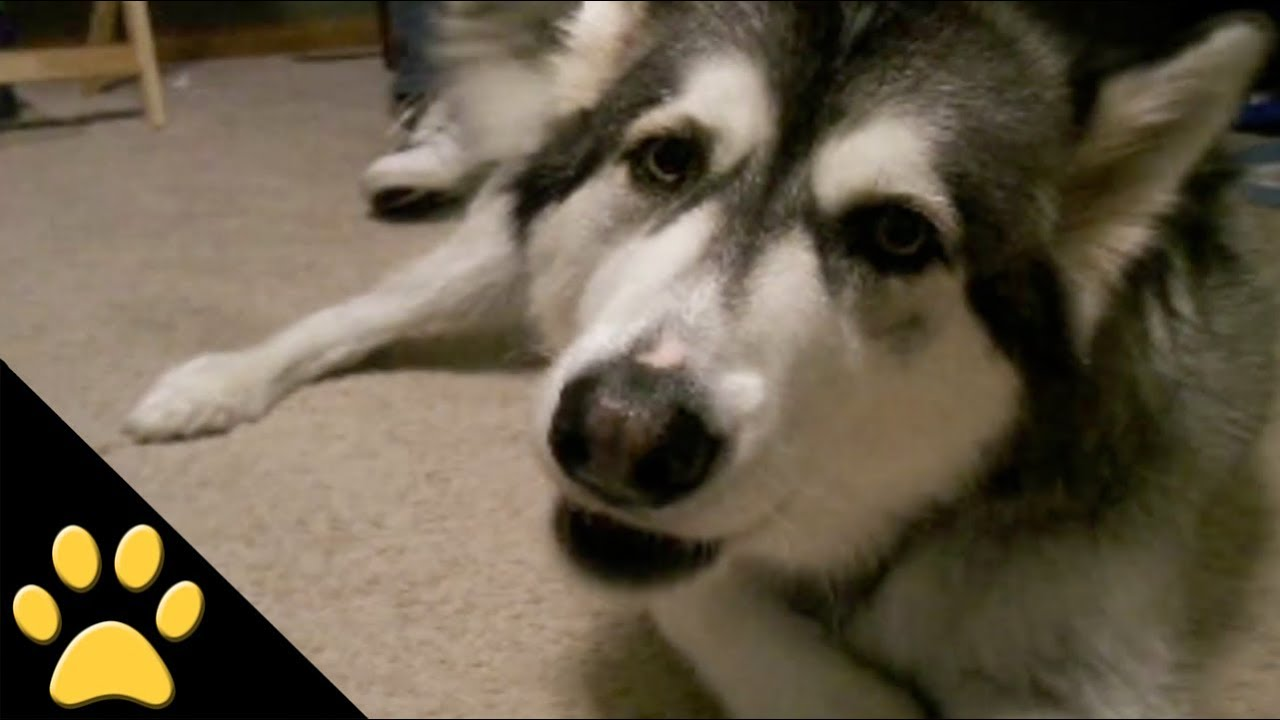 If Your Dog Could Talk Video