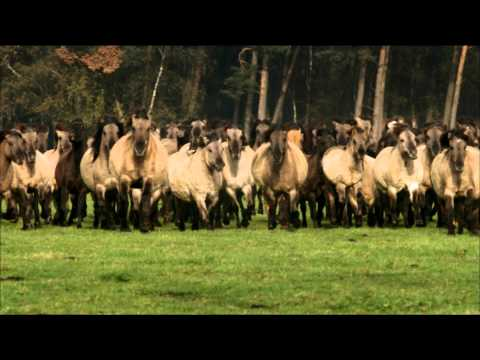 """Europe's Last Wild Horses""-(official trailer) a film by Christian Baumeister"