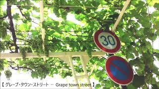 【 グレープ・タウン・ストリート - Grape town street 】オリジナル曲 ( jazz fusion instrumental )