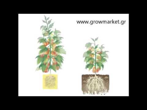 Vs hydroponics vs soil youtube for Soil vs hydro