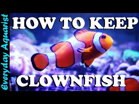 Keeping Nemo: How To Care For Clownfish In An Aquarium