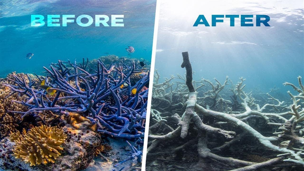 Bildresultat för oceans climate change