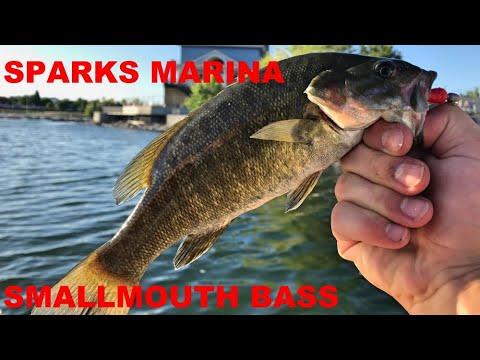 Sparks Marina Smallmouth Bass Fishing