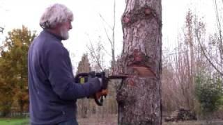 Faire une entaille directionnelle pour abattre un arbre