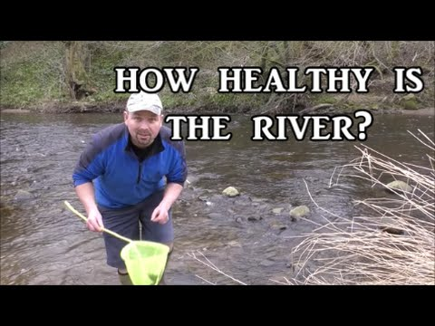 Kick Testing a River - Checking Ecosystem Health