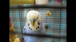 Берегите попугая,птица очень дорогая...