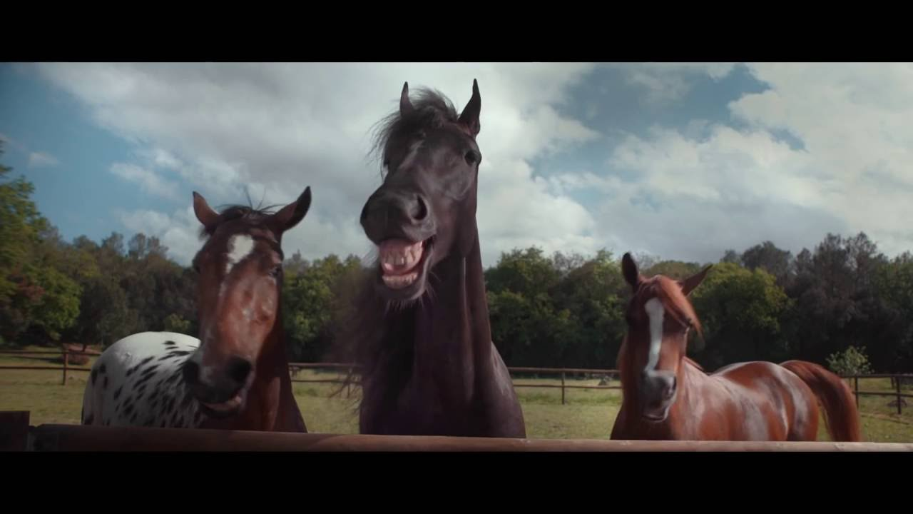 VW Tiguan TV-spot - Laughing horses 2016 new / neu - YouTube