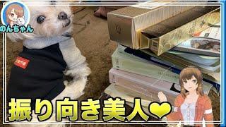 韓国お土産の山と記念撮影♪ 可愛いマルチーズ犬´•ﻌ•`   のんちゃんと韓...
