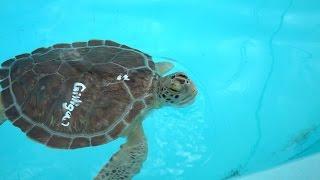 Florida Keys Vacation | Day 3 Part 1 | Turtle Hospital & Rehab Center In Marathon Florida