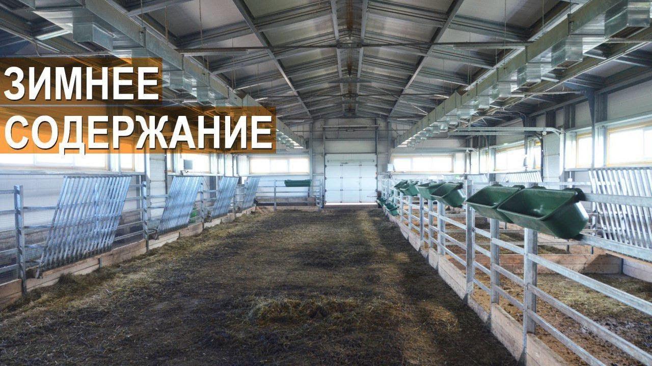 Купить сельскохозяйственных животных и птиц, коров свиней лошадей овец кроликов пчел цыплят, оптом и в розницу объявления о продаже, цены и спрос в московской области.