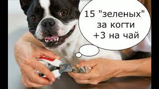 ЛЮБОВЬ НЕЛЬЗЯ КУПИТЬ ИЛИ ЗВЕРИНЫЙ ОСКАЛ КАПИТАЛИЗМА.как живут собаки в США