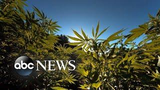 Debate over marijuana in sports grows amid Sha'Carri Richardson controversy