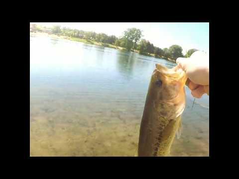 Summer Pond Bass + Catfish