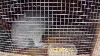 Первое пробное видео. Наши кролики.(Всем привет! Первое пробное видео о наших питомцах - кроликах. Будем знакомится со всеми жителями. Дальше..., 2015-10-24T18:53:03.000Z)