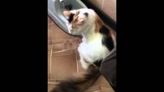 """Поилка для кошек """"УНИТАЗ"""""""