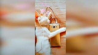 Смешные кошки Сентябрь 2019 Новые приколы с котами, смешные коты приколы про кошек funny cats #97