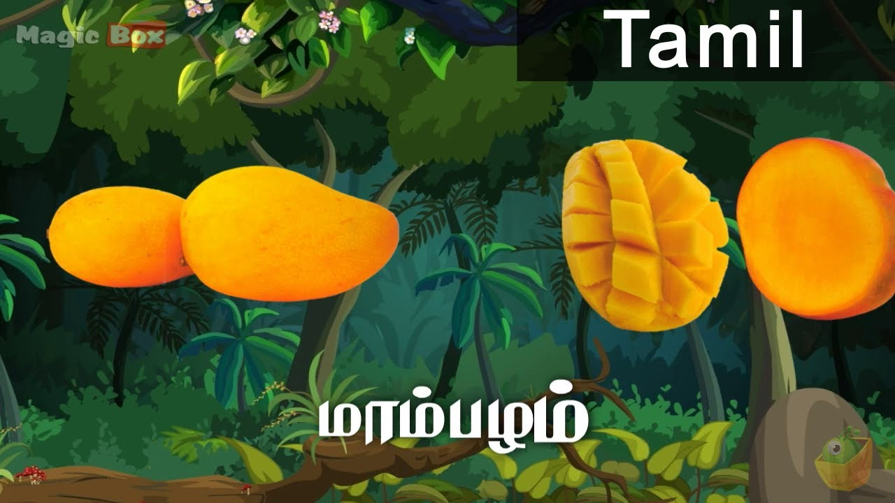 mango fruits in tamil pre school animated educational videos mango fruits in tamil pre school animated educational videos for kids