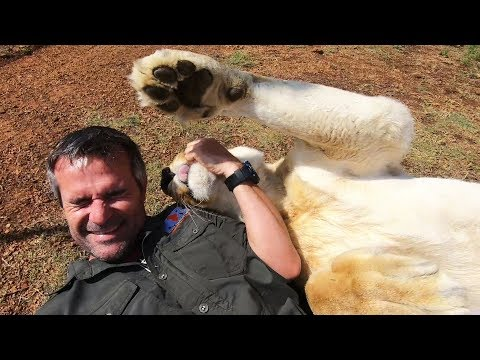 They've Gone CRAZY #AskMeg | The Lion Whisperer