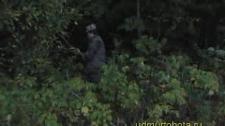 Охота на медведя на овсах видео