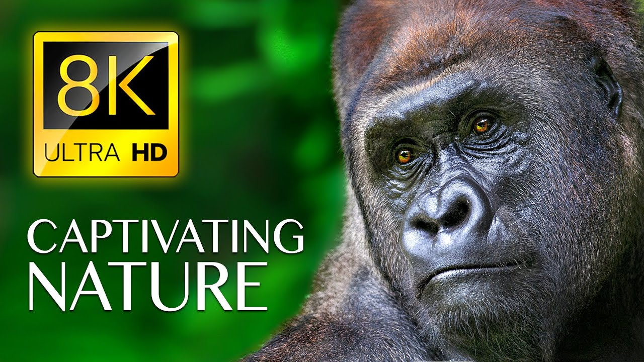Download CAPTIVATING NATURE in 8K ULTRA HD - Wildlife Videos with Nature Sounds Relaxing Music