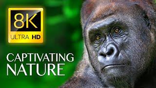 ЗАХВАТЫВАЮЩИЕ ПРИРОДЫ в 8K ULTRA HD - видео о дикой природе со звуками природы расслабляющей музыкой