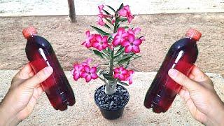 Faça Suas Plantas Florir Em Pouco Tempo