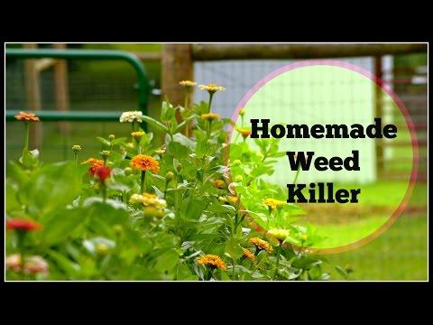 Homemade Weed Killer Natural Weed Killer Alternative